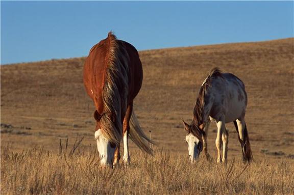 index_horse2.jpg